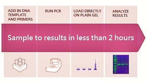 Safe-GreenTM 2X PCR Taq MasterMix