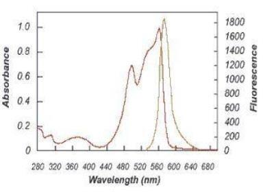 R-Phycoerythrin 1 mg