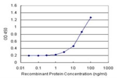 Endothelin-3 Antibody Pair 1 Set