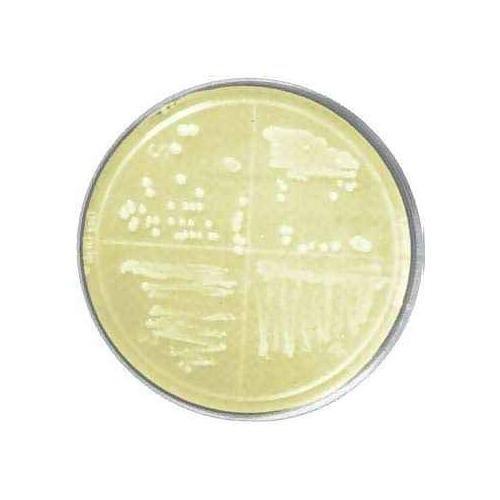 bioWORLD 30627001-2 Luria-Bertani LB Agar Plate Pack of 50