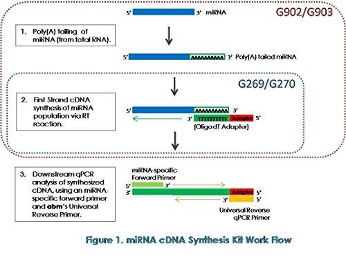 miRNA cDNA Synthesis Kit