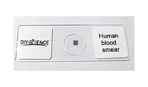 Human Blood Film Slide Smear Wrights Stain Prepared Microscope Slide