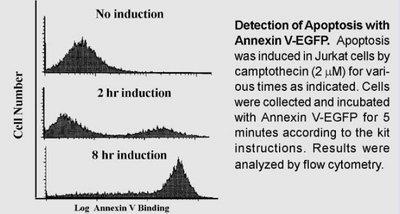 BioVision Annexin V-EGFP Apoptosis Kit K104-100
