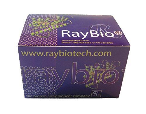 RayBiotech ApoSENSOR™ ATP Cell Viability Assay Kit 1000 assays 68CV-ATP-S1000