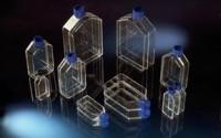 Nunclon-Δ-Flasks-Culture-area-25cm2-Angled-neck-34.jpg
